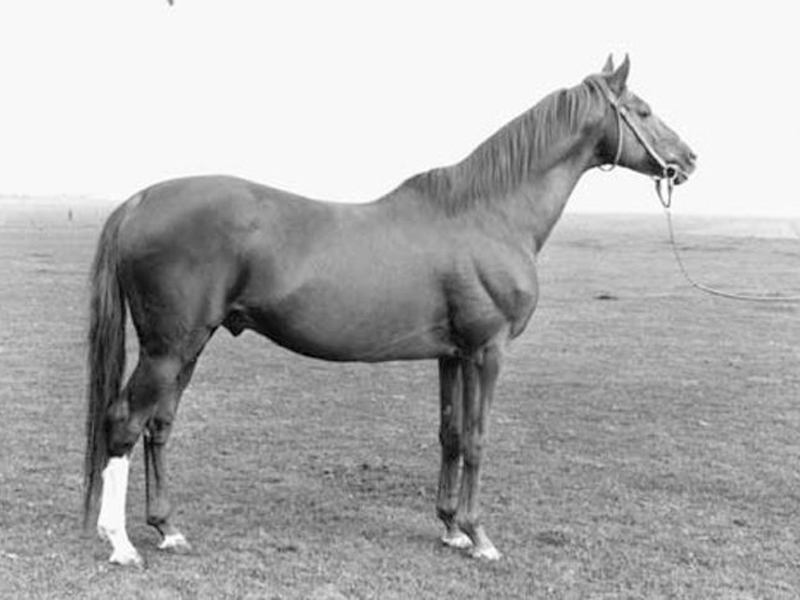 Grand-Empereur-(Wild-Risk-x-Nosca)