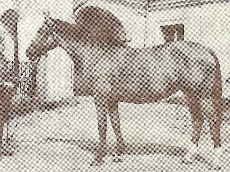 Horse_Belina_I-big